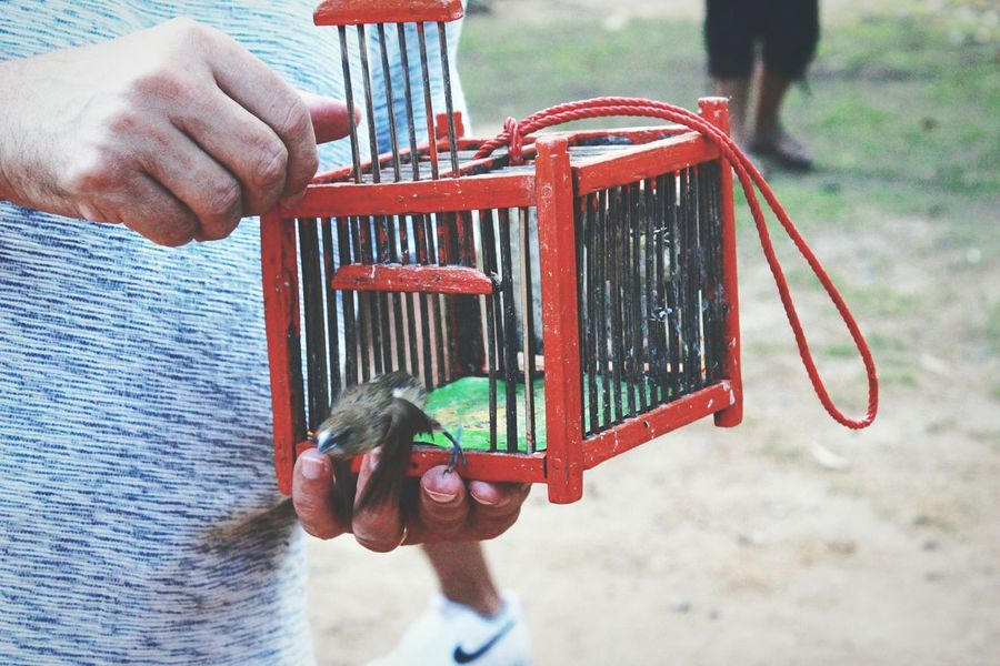 """""""I felt free and therefor I was free"""" Freedom Flying Bird Photography Cagedbirds Cage Jack Kerouac Thailand Thailandtravel EyeEm Thailand Ayutthaya Ayutthaya 
