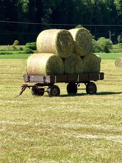 Field Bale  Plant Land Hay Sunlight Nature Transportation No People Day Farm Rolled Up