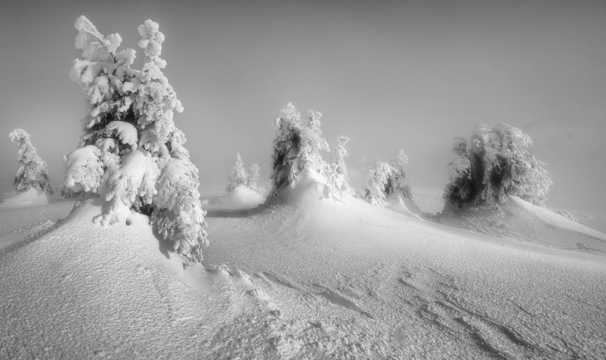 Panoramic shot of trees on snow covered land