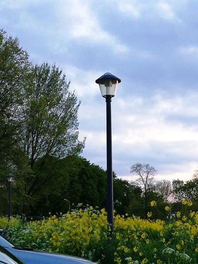 Cloud - Sky Street Light Lighting Equipment Sky No People Floodlight Outdoors Day Tree Nature HuaweiP9Photography Grass Yellow Color Yellow Flower Made By Noesie Trees And Sky Landscape_photography