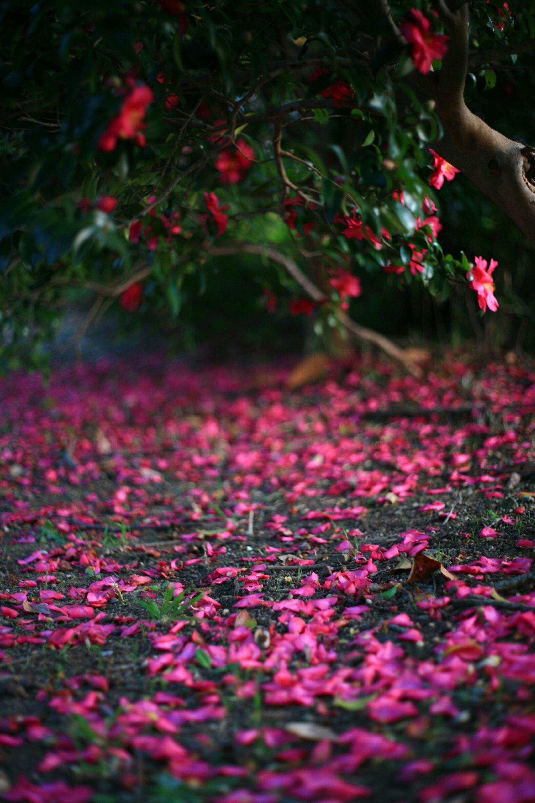 flower, growth, nature, pink color, selective focus, beauty in nature, plant, leaf, freshness, red, tree, autumn, season, tranquility, fragility, park - man made space, field, change, outdoors, fallen