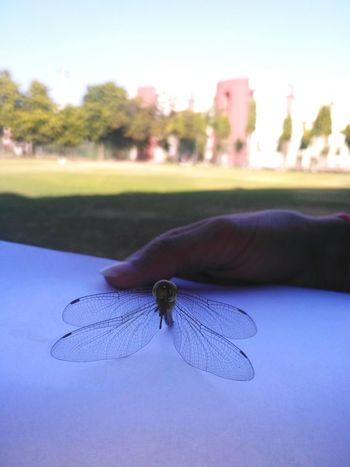 Lieblingsteil Insect GITjaipur Collegediaries Redmi3sprime