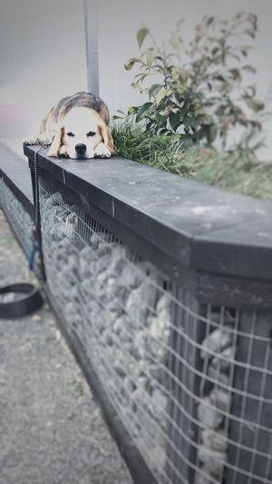 Focus Object Close-up Dog Dog Lovers🐾 Beagle Pauatahanui New Zealand Senior Dogs Dog Portrait Pet Portraits