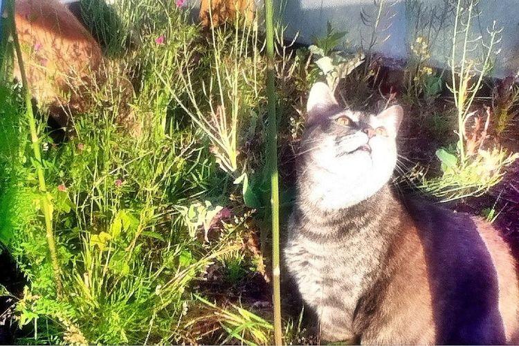 Sandy Kat - jungle kitty. Cat Kitty Pets Streamzoofamily
