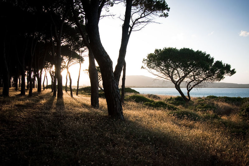 Sunset on Sardinia in Italy Beach Beauty In Nature Hiking Landscape Nature Outdoors Sand Shadows Sky Sunset Tree Water