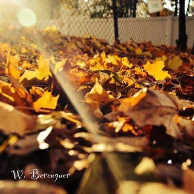 EyeEm Best Shots EyeEm Nature Lover Autumn Autumn Leaves