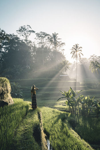 Beautiful woman standing in the middle of rice paddies on a warm summer morning during sunrise Bali INDONESIA Travel Adventure Agriculture Beauty In Nature Clear Sky Explore Field Grass Growth Landscape Nature New Day One Person Palm Tree Rice Field Rice Paddy Rice Terraces Summer Sunlight Sunrise Tree Warm Warm Light The Traveler - 2018 EyeEm Awards Capture Tomorrow