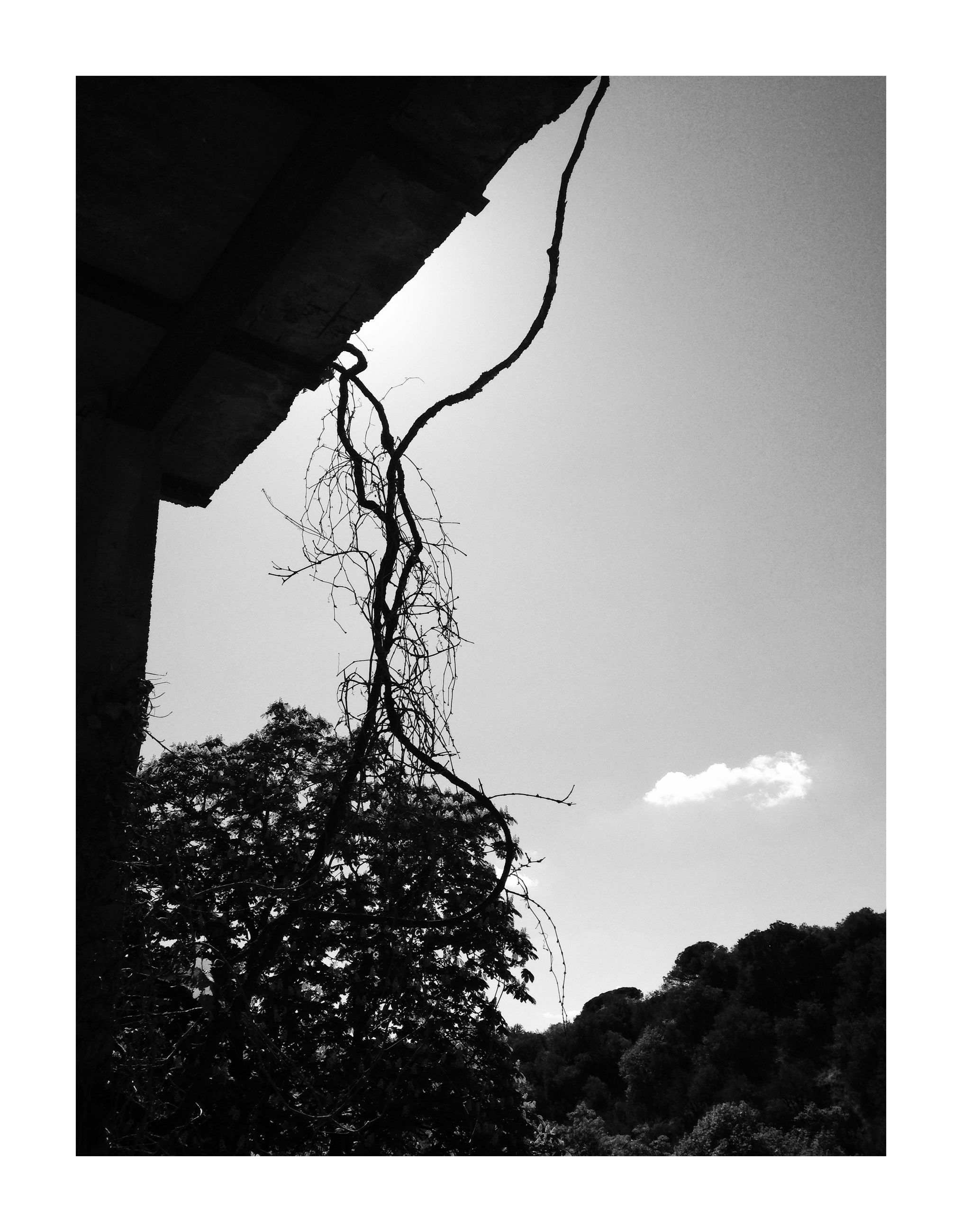 sky, transfer print, tree, auto post production filter, plant, architecture, low angle view, nature, no people, built structure, day, outdoors, silhouette, clear sky, growth, copy space, environment, landscape, land, architectural column