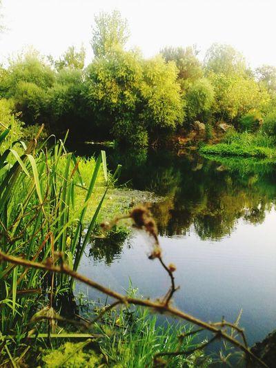 Antalya başka yerlerden Suda Yansıma Yansıma Söğütlük Söğüt  Yosun Doğanınrenkleri Doğanın Ahengi Yeşilik Yeşil / Green ♧ Duden Waterfall Düden Akarsu Yeşil Doğa Sessizlik Doğa Plant Tree Water Lake Growth Green Color Nature No People Day EyeEmNewHere EyeEmNewHere