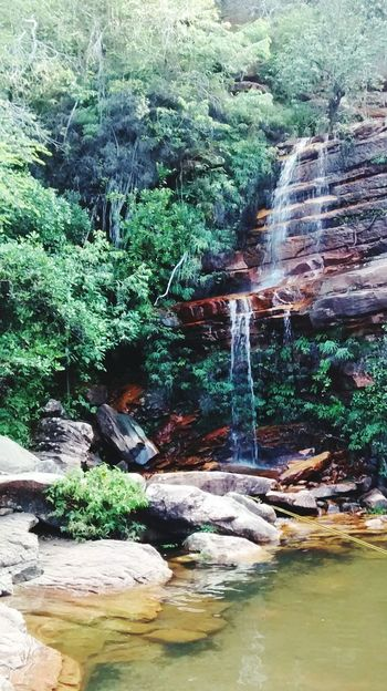 Water Tree Forest Tranquil Scene Waterfall Tranquility Nature Flowing Water Motion River Beauty In Nature Green Color Non-urban Scene Natural Landmark Chapada Diamantina Lençóis