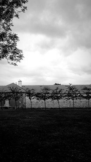 No each Blackandwhite Petrïn Prague Sky Cloud - Sky Nature No People Day Plant Fence Tree Tranquility Grass