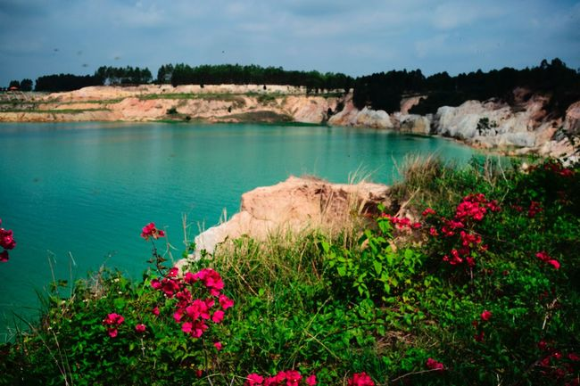 Flower Flowering Plant Plant Water Beauty In Nature Nature Growth