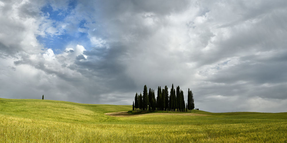 Val d'Orcia, Italy- June, 2019: Cypress trees near San Quirico d'Orcia with beautiful cloudy sky, Italy. Agriculture Beautiful Wheat Field Pienza Cloud Cloudy Sky Country Countryside Cypress D Day Daylight Environment Europe Farmland Field Flower Grass Green Group Hills Isolated Italy Landmarks Landscape Meadow Nature Orcia Wheat Plant Poppy Rural San Quirico Scene Scenery Seasonal Siena Sky Spring Summer Sun Sunny Tourism Travel Tree Trees Tuscany Val  Vegetation View
