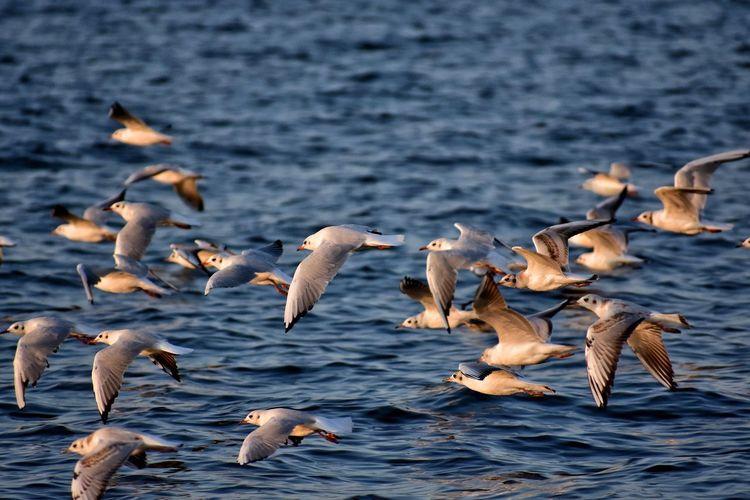 Bird Water Swan