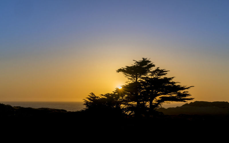 Sunset Silhoutte Beauty In Nature Clear Sky Day Growth Landscape Nature No People Outdoors Scenics Silhouette Sky Sunset Tranquil Scene Tranquility Tree