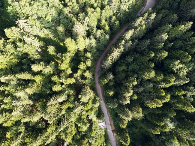 Drone  Aerial View Backgrounds Beauty In Nature Coniferous Tree Day Dronephotography Droneshot Environment Forest Full Frame Green Color Growth High Angle View Land Nature No People Outdoors Plant Rainforest Scenics - Nature Tranquil Scene Tranquility Tree Tree Canopy  WoodLand