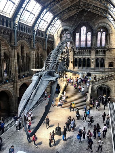 Your Ticket To Europe London Mesuem The Natural History Museum Bones Whale Museum Of Natural History IPhoneography Travel Photography Postcode Postcards