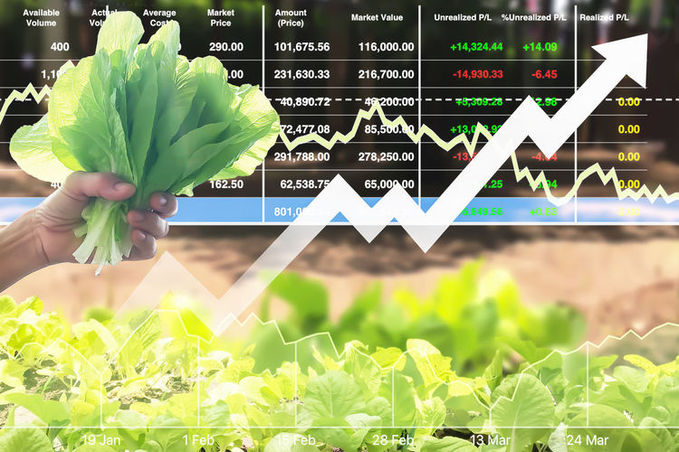 Successful investment on agriculture business with graph and chart data. Real People Human Hand Hand Leaf People Human Body Part Green Color Plant Part Nature Business Leisure Activity Finance Focus On Foreground Day Growth Diagram Text Graph Close-up Finger
