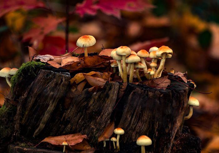 Herbst Herbststimmung Nature Photography Nature Forrest Wahnerheide Deutschland Impression Wald EyeEm Deutschland Köln Cologne