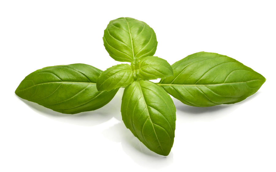 Fresh basil leaves, isolated on white green basil herb, design element or out object. Isolated Basil Isolate Basil Leaf Basil Leaves Close-up Cut Out Design Element Food Food And Drink Fresh Basil Freshness Green Color Green Leaf Healthy Eating Herb Indoors  Isolated On White Isolated White Background Leaf Nature No People Plant Plant Part Studio Shot White Background