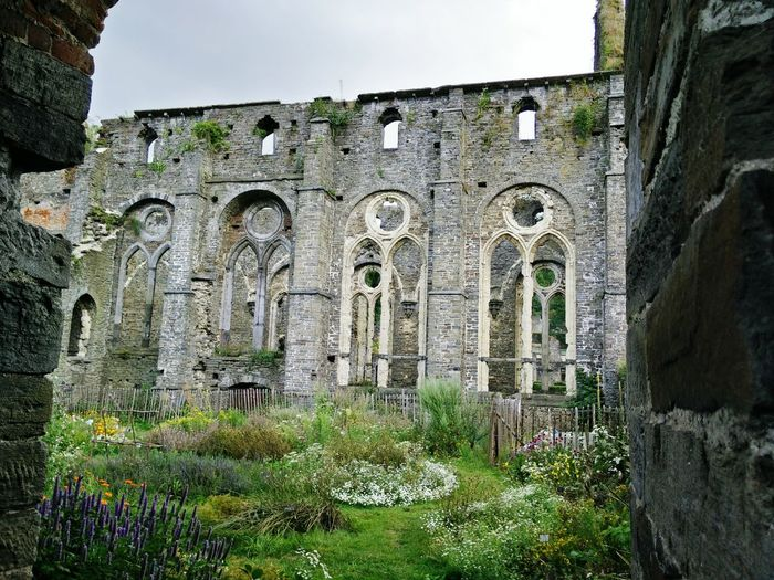Abbey Ruins Old Belgium Garden Flowers First Eyeem Photo