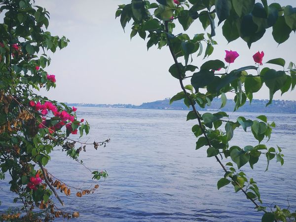 Maximum Closeness Riverbank Riverside River Nature Plant Horizon Over Water Water Scenics Outdoors No People Sky Beauty In Nature Day Africa Congo Brazzaville Brazzaville Congo Clear Sky Landscape Africa Day To Day Nature Tranquility