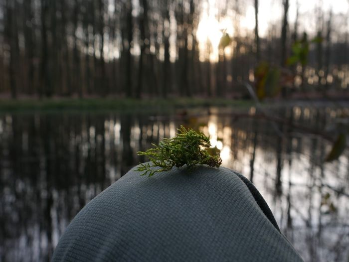Trees Focus Calm Moss Plant Tree Focus On Foreground Water Nature Growth Human Body Part Lake One Person Real People Day Forest Outdoors Close-up Reflection Hand