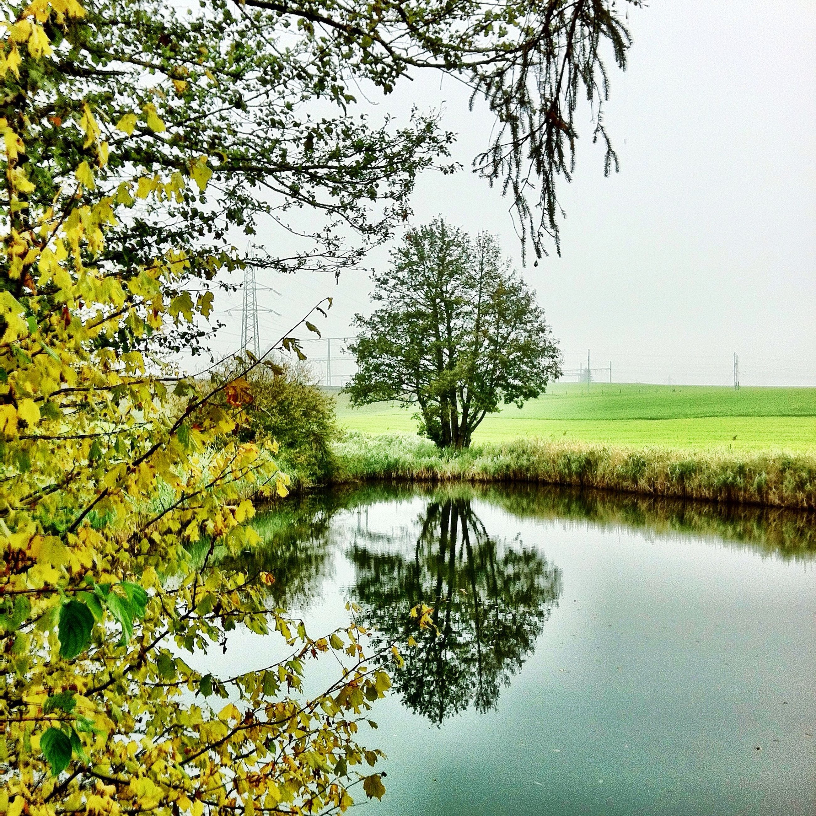 tree, water, tranquility, reflection, tranquil scene, lake, scenics, beauty in nature, nature, branch, growth, grass, waterfront, sky, river, green color, clear sky, idyllic, landscape, standing water