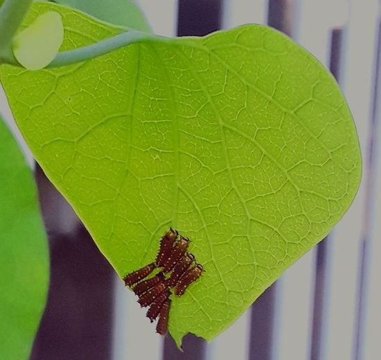 Nature Leaf Close-up Plant Green Color Leaf Vein Natural Pattern Dew Butterfly Butterfly - Insect Plant Life