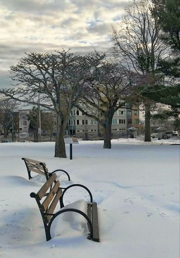 Snowplace to sit ~ Winter Snow Cold Temperature Tree Outdoors Day No People Nature Sky Loving The Landscape Clouds My City Tranquility Beauty In Nature Time To Reflect City Park My Unique Style Happy Moments In Portland Maine USA