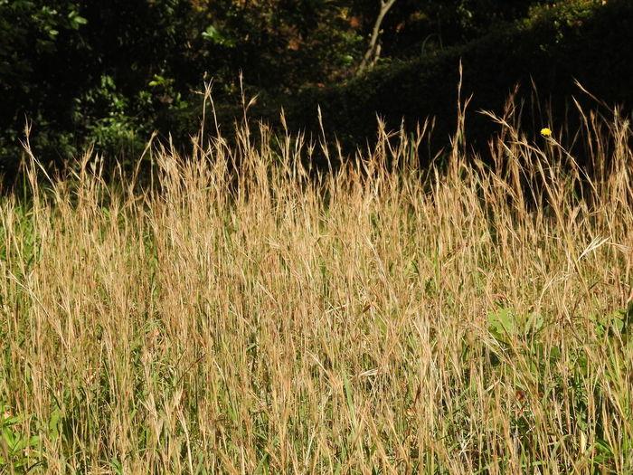 鴨池公園 Plant Land