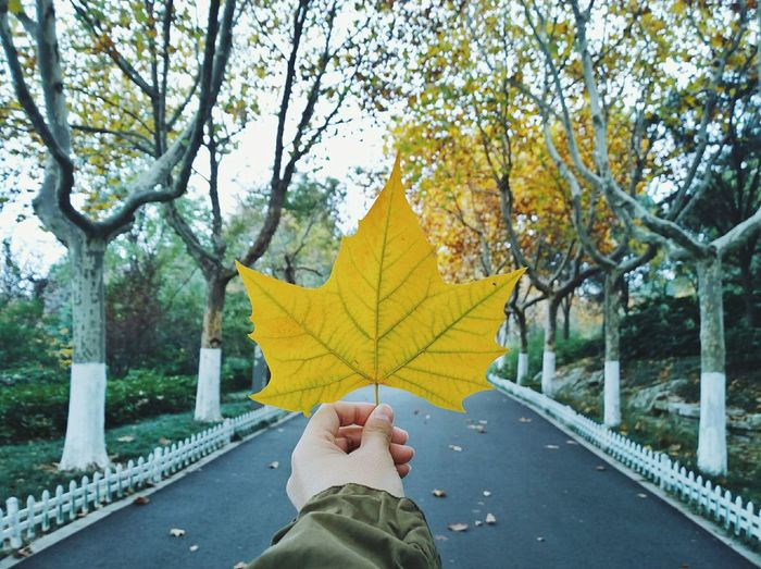 Tree One Person Low Section Autumn Human Body Part Change Leisure Activity Lifestyles Personal Perspective Real People Yellow Adults Only Outdoors Human Leg Men Women Adult People Day Only Women
