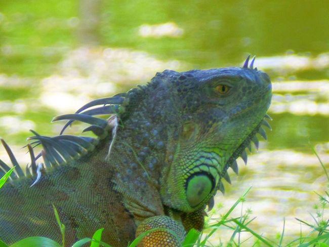 Komodo Dragon Color Palatte dragon Nature Outdoors Wildlife