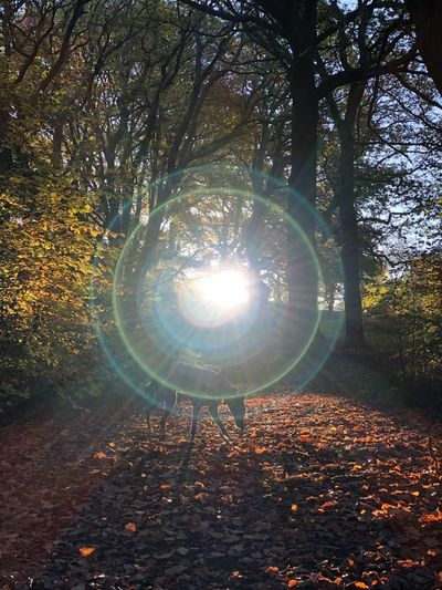 Sunlight streaming through trees during autumn