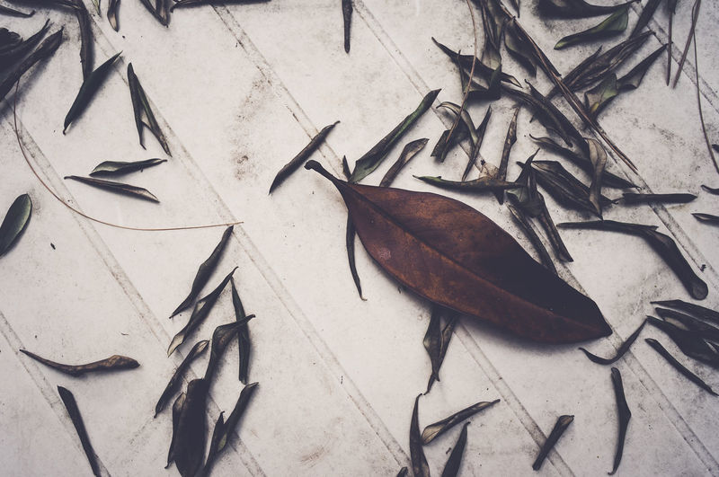 High angle view of fallen dry leaves on white table