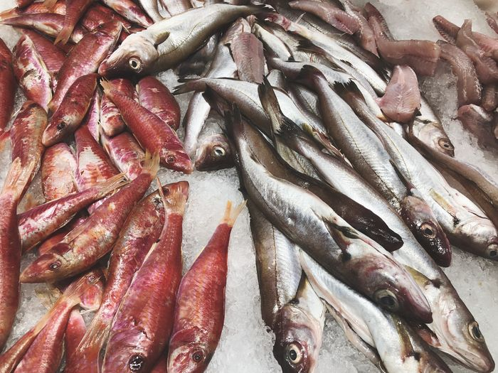 Directly above shot of fishes on crushed ice in market for sale
