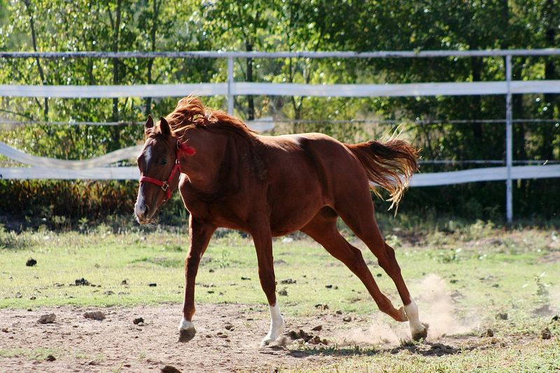 Animal Domestic Animals One Animal Day Grass Outdoors Mammal Animal Themes No People Pets Dog Rural Scene Nature Protruding Tree Thoroughbred Horse Photography  Horse Horse Photography