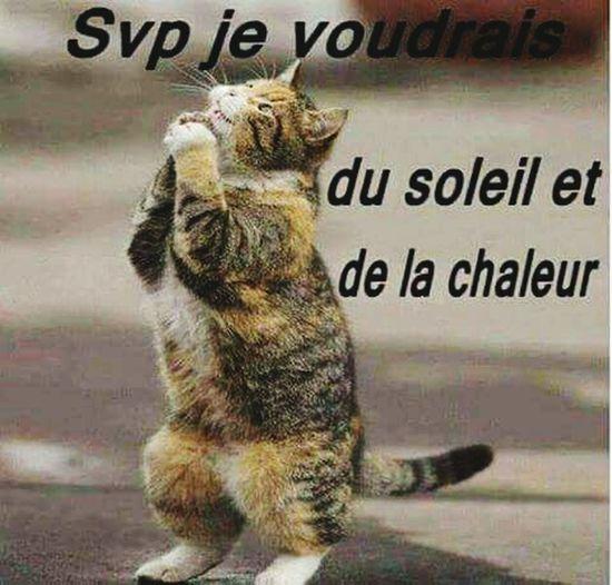 Cat Lovers Recherche Le Soleil Prière Du Chat Humour Du Jour