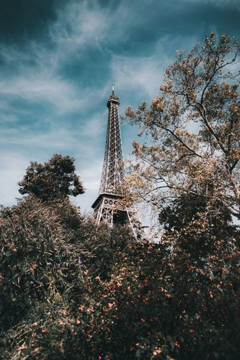 Low angle view of trees and eiffel tower against sky