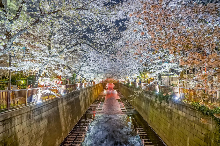EyeEm Best Shots EyeEm Nature Lover EyeEmNewHere Sakura Tokyo Architecture Autumn Beauty In Nature Built Structure Canal Change Cherry Blossom Cherry Tree Diminishing Perspective Direction Flower Footbridge Footpath Growth Nature Outdoors Plant The Way Forward Transportation Tree