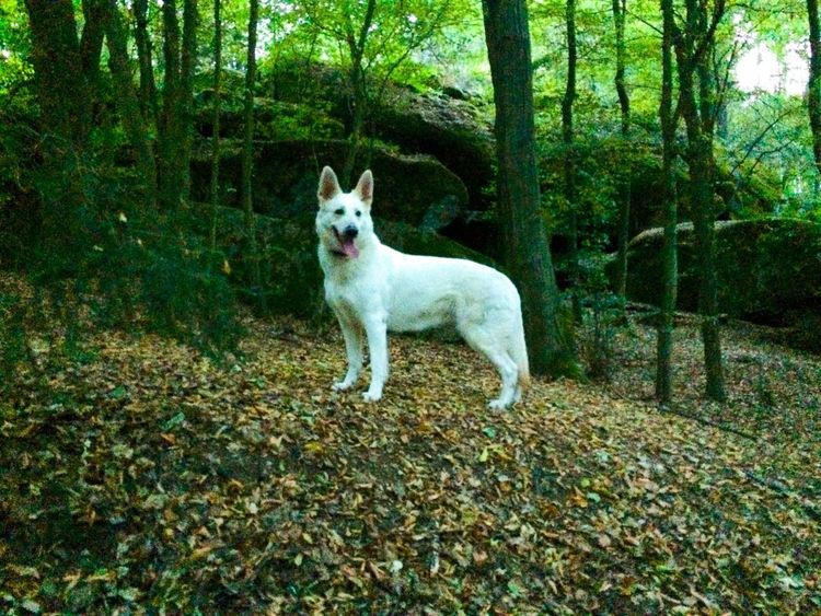 One Animal Domestic Pets Domestic Animals Mammal Animal Themes Animal Dog Tree Nature Day Land No People Green Color Looking At Camera