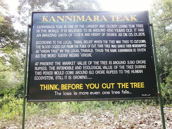 Think before u cut a tree