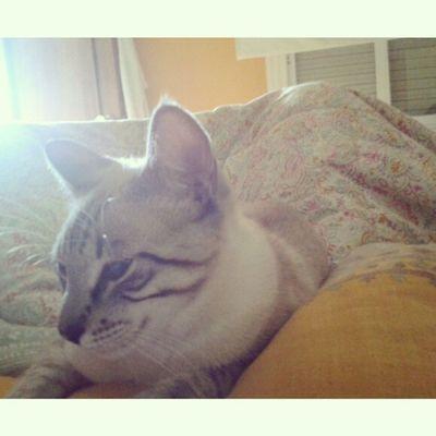 Buenos días desde mi cama! Gm  Bd Cat Ill