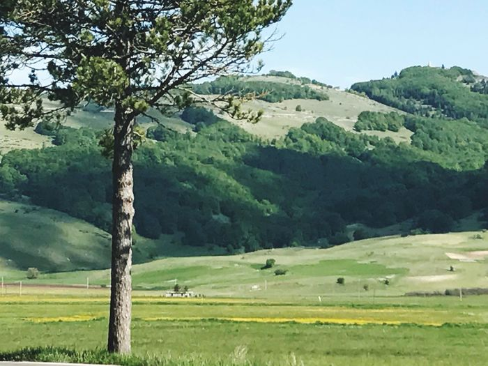 Tree Nature Landscape Green Color Field Tranquil Scene Beauty In Nature