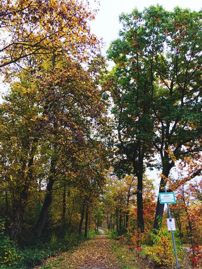 Tree Nature Outdoors Autumn Herbststimmung Herbstfarben Idyllic