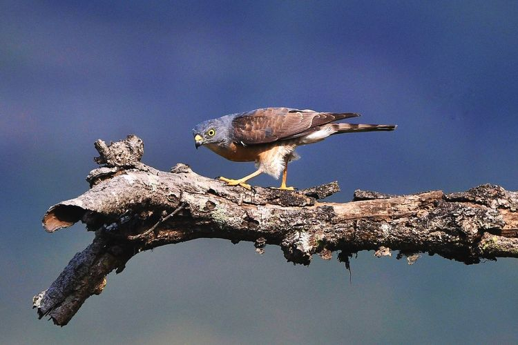 Bird perching on branch against sky
