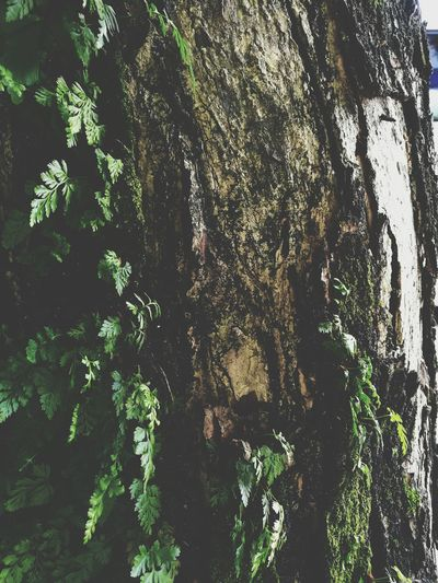 Tree Growth Day Nature Full Frame Leaf Backgrounds Green Color Outdoors No People Plant Tree Trunk Close-up Beauty In Nature Textures And Surfaces Barks Of A Tree Bark Bark Texture Tree Bark Beauty Tree Bark Colors Tree Bark Tree Bark Patterns Ferns Beauty In Nature Tree Bark Texture Perspectives On Nature Summer Road Tripping