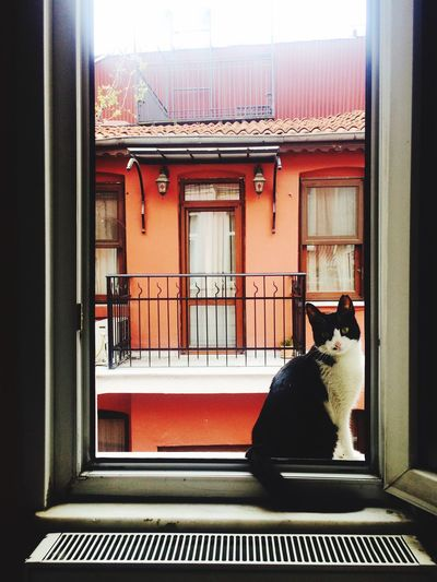 Istanbulove Istanbul Turkey Istanbullovers Istanbuldayasam Istanbul City Balat Balat Istanbul [ Istanbul Cat Cat♡ Cat Lovers Sweet Kedi Photography Pet Portraits Pet Portraits