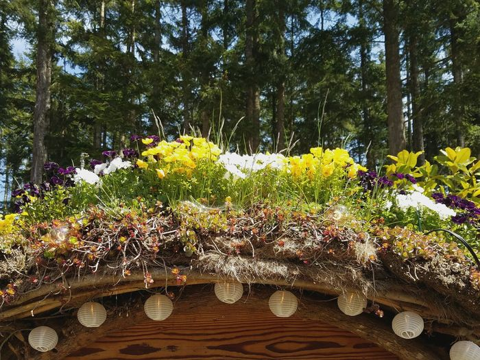 Flower Tree Nature Growth Day Yellow Outdoors Beauty In Nature No People Fragility Freshness Hobbit House Details