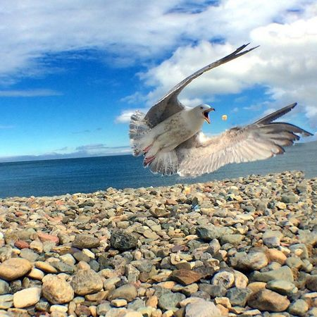 Capture The Moment Seagull Feeding Animals Bird Llandudno Sea Onlymobilephoto Iphone5s IPhoneography